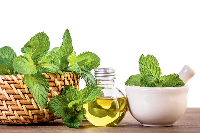 Beneficios y contraindicaciones de menta