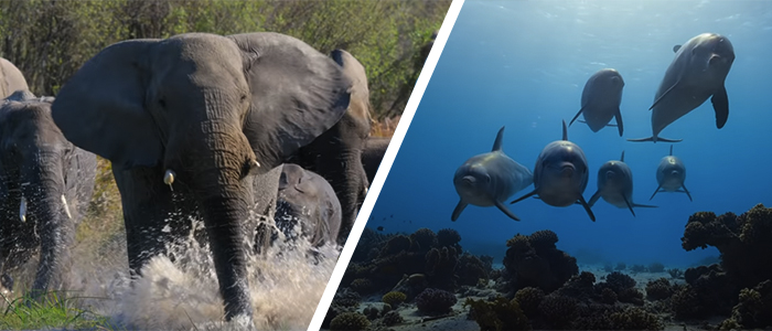 Disneynature Elephant and Dolphin Reef Trailer